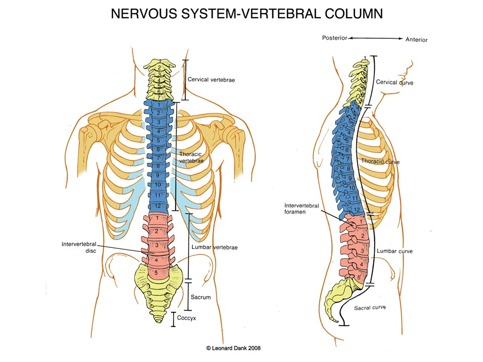 Spinal Cord Injury Resources - SCI   Shirley Ryan AbilityLab ...